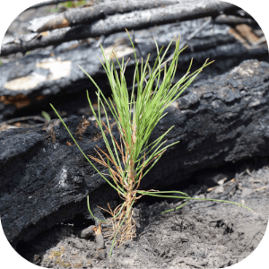 Plant Two Trees Through the National Forest Foundation